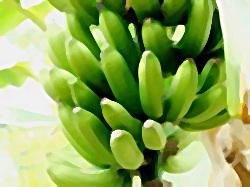23-manfaat-buah-pisang