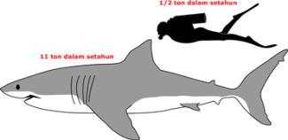 1280px-Great_white_shark_size_comparison.svg